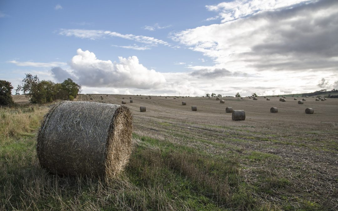 Reflections on diversity, food and farming in Britain